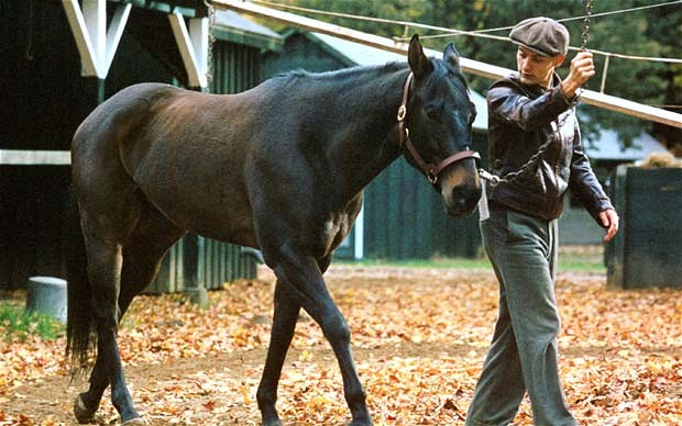 Reducing Stress for First Time Horse Owners